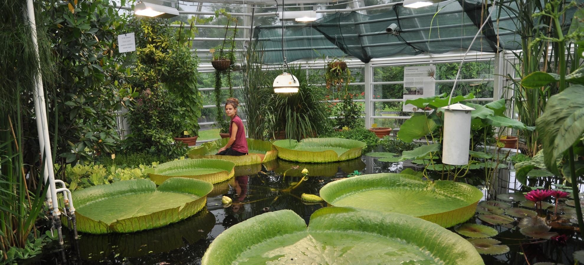 puutarha munkkivuori